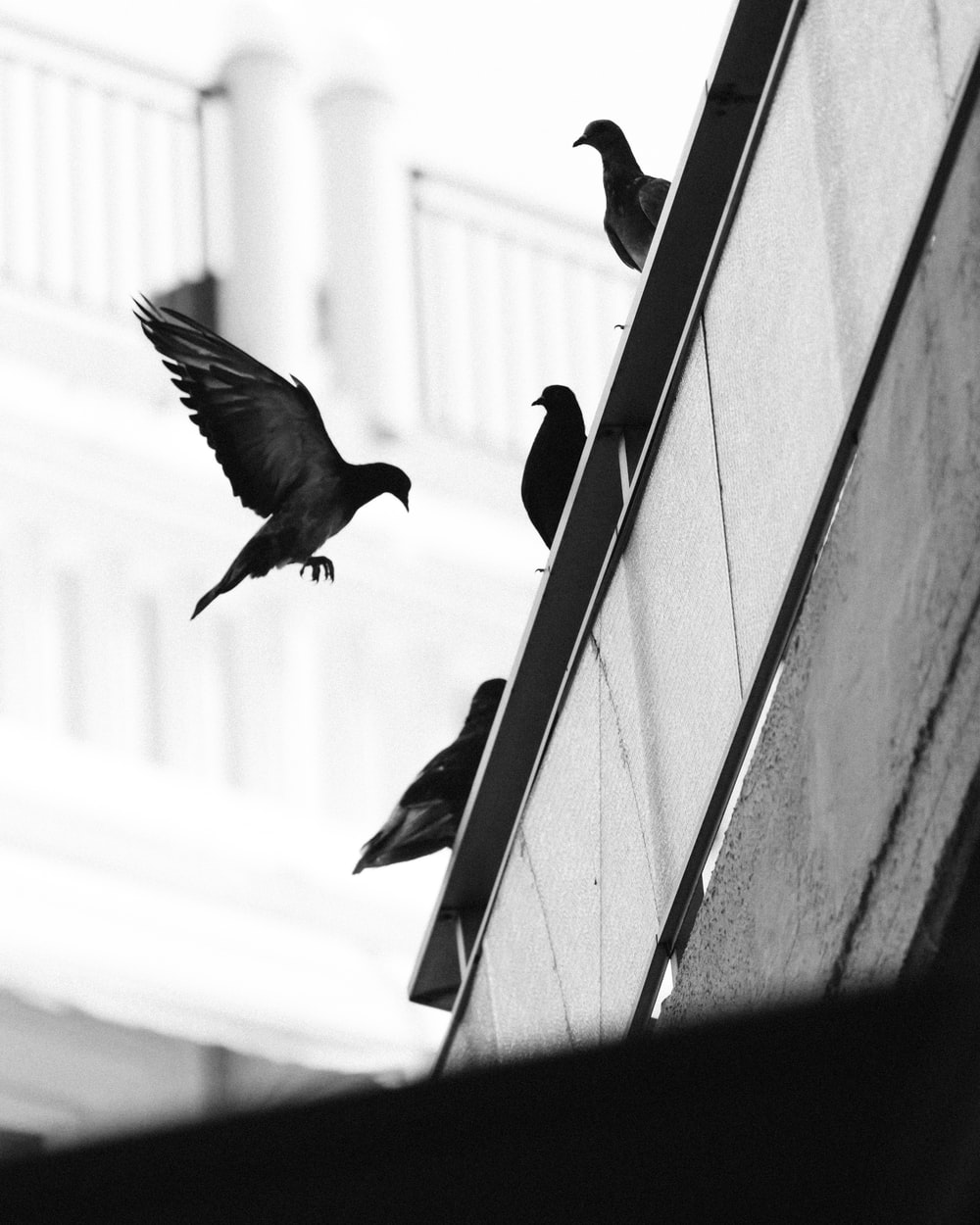 flock of pigeons at the edge of the roof