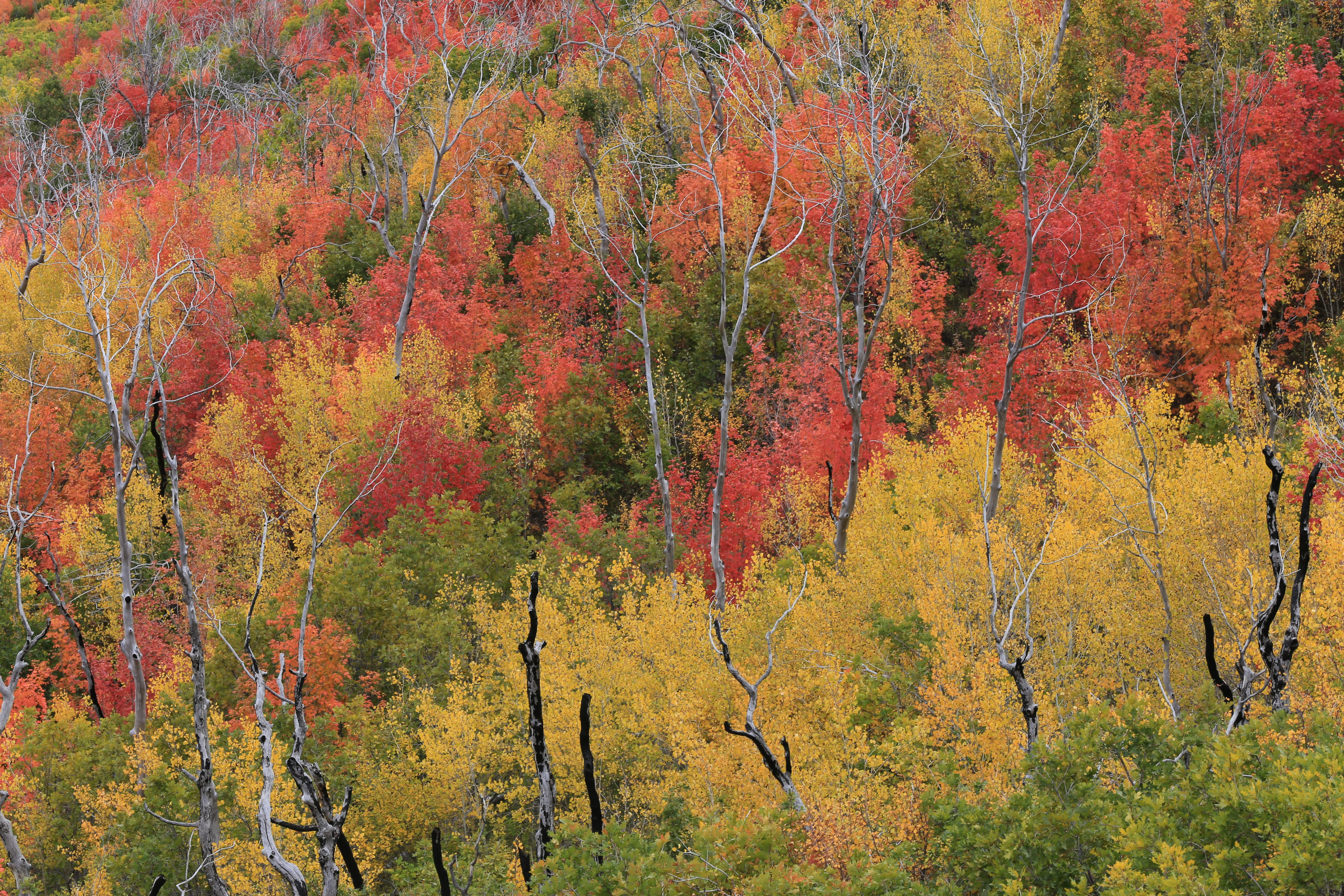 green, brown, and orange leafed trees