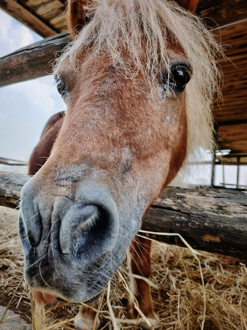 brown horse head between wooden fence closeup photography