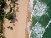 aerial photography of seashore near trees