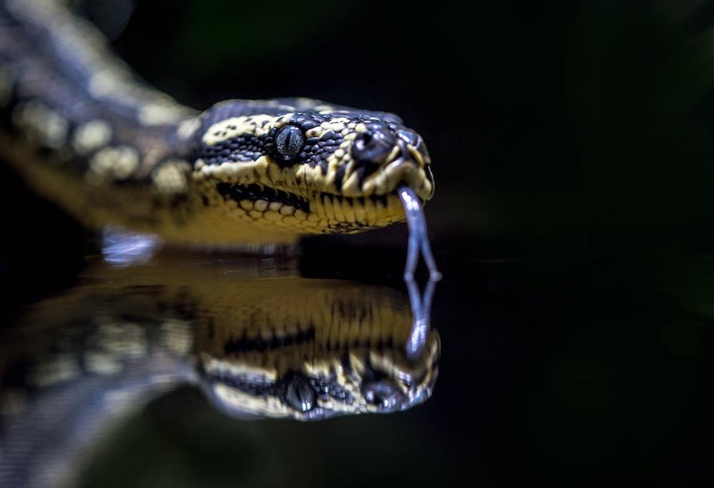 beige and black snake