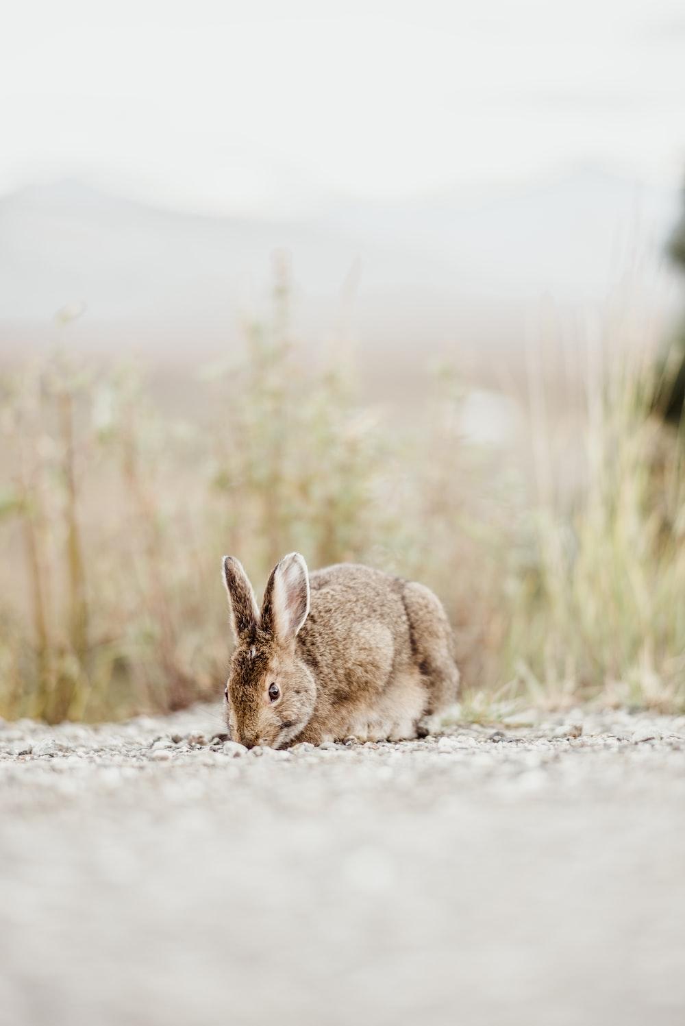 brown rabbit near grass during daytime
