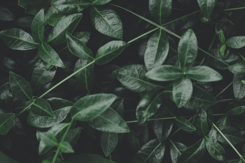 closeup photo of green leaves