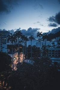 silhouette of coconut trees and buildings