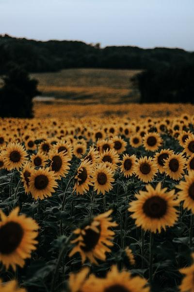 3875. Virágok