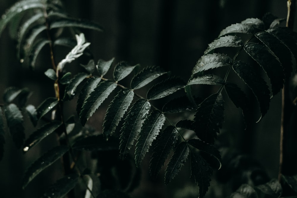 photography of fern plant