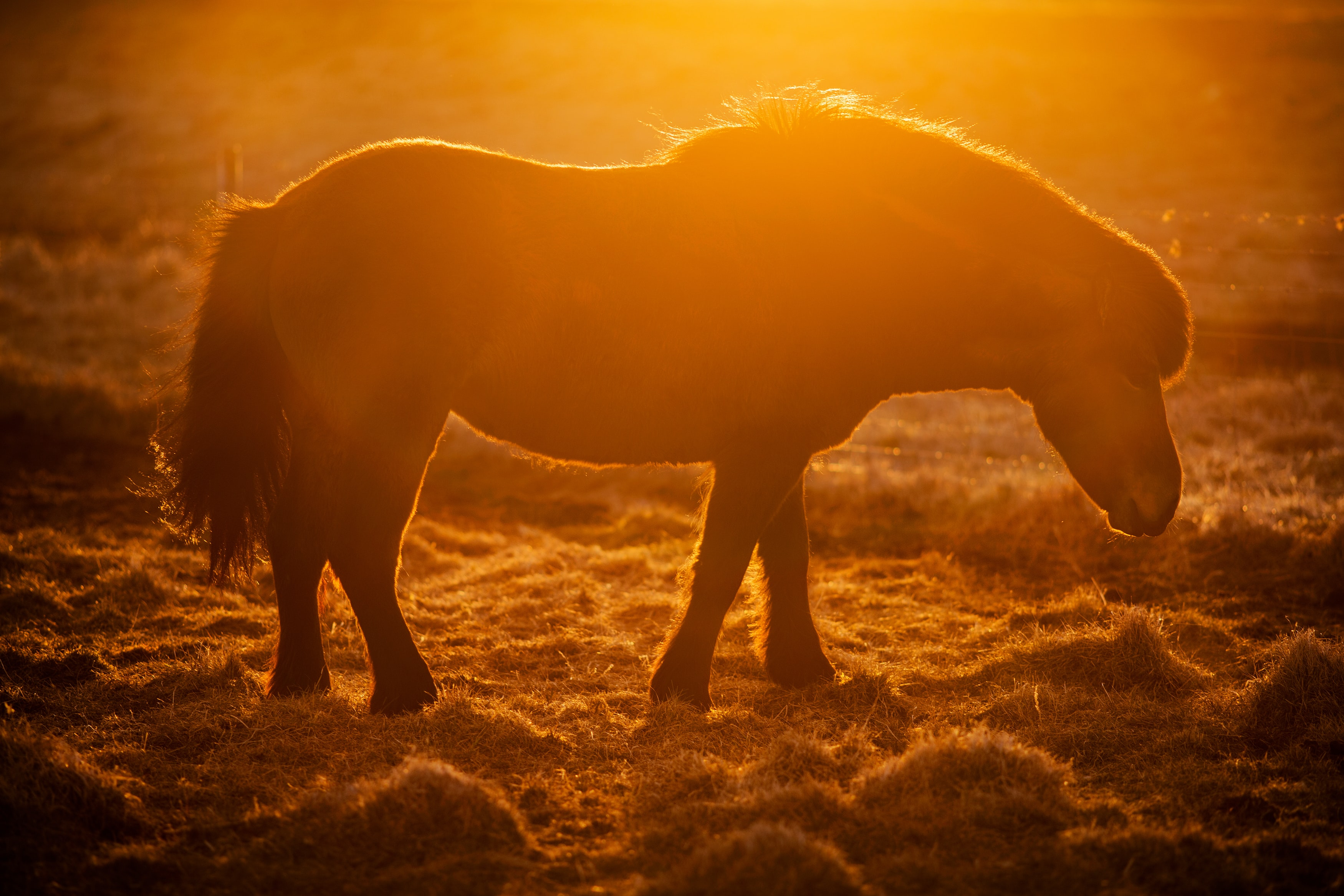 silhouette photo of horse during golden time