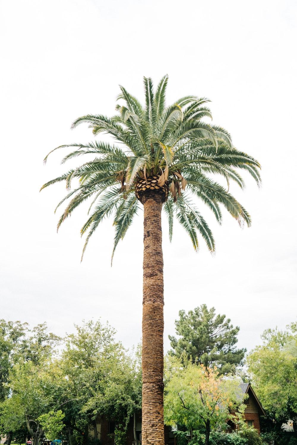 palm tree near trees