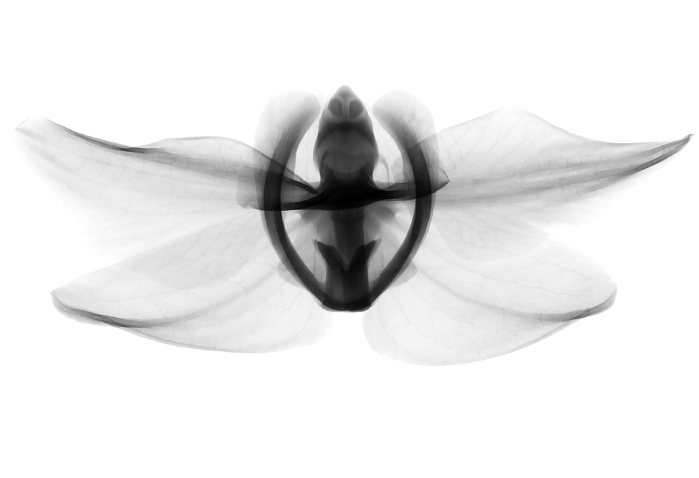 black and white winged insect