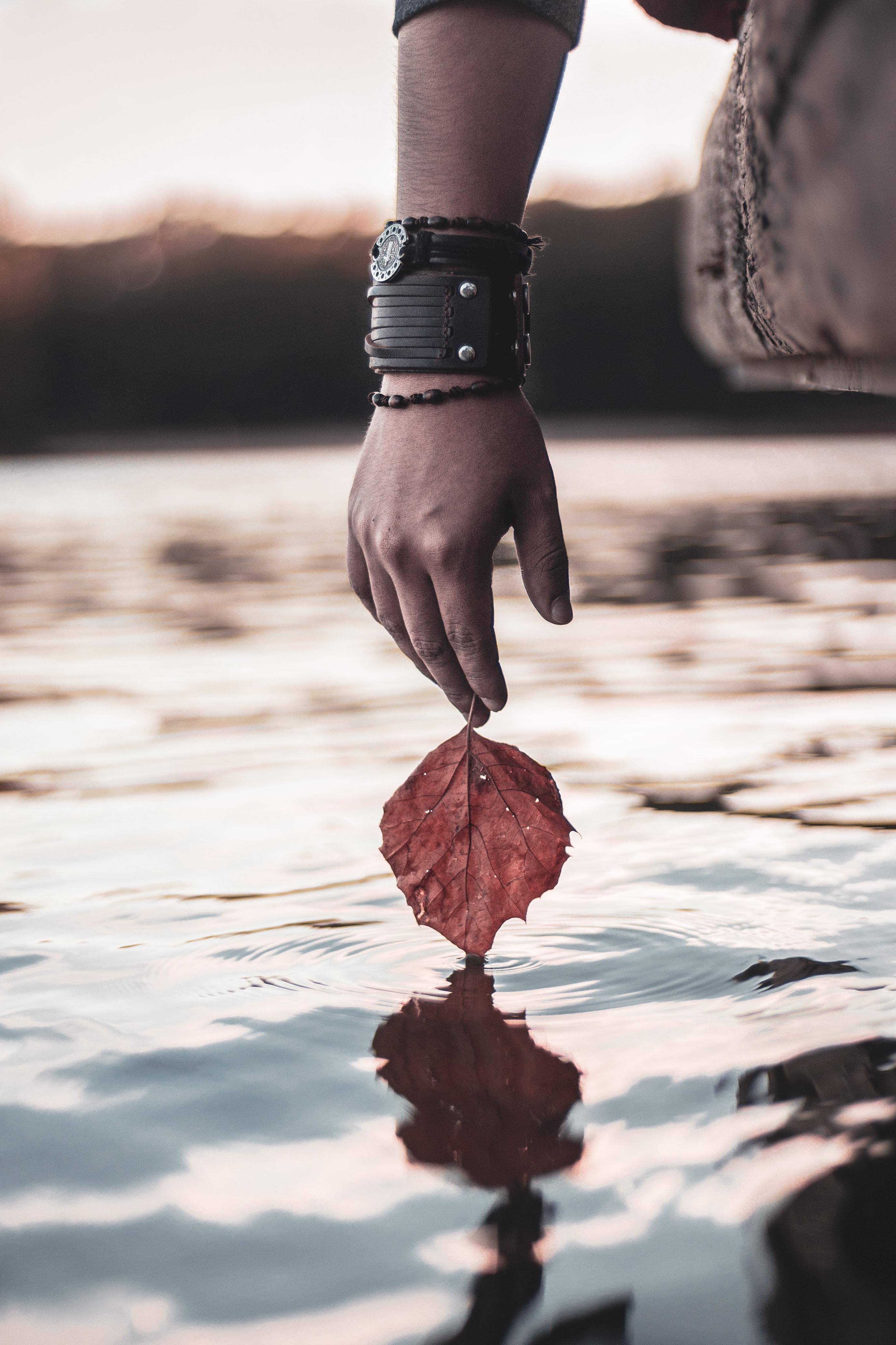 person holding red leaf above calm water