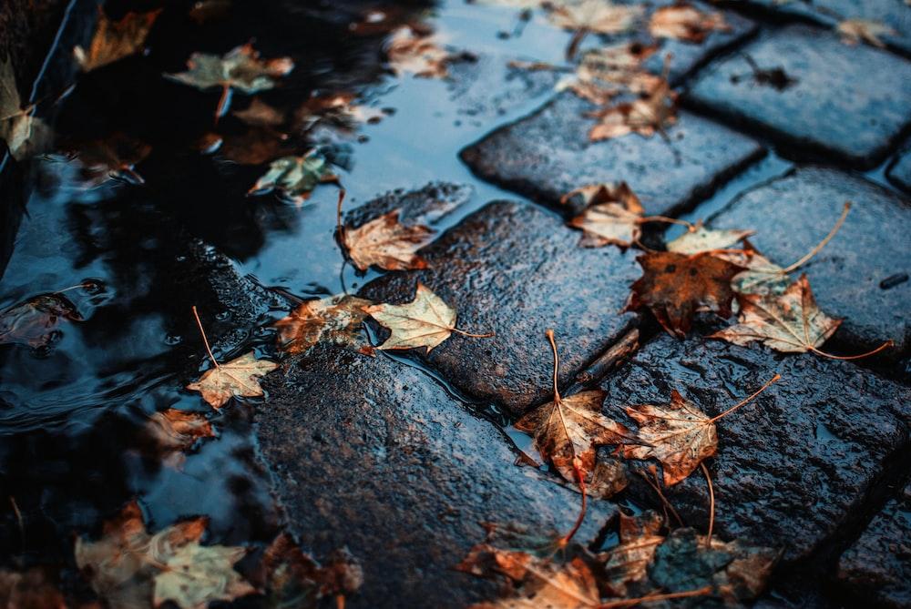 brown leaf on floor during rain
