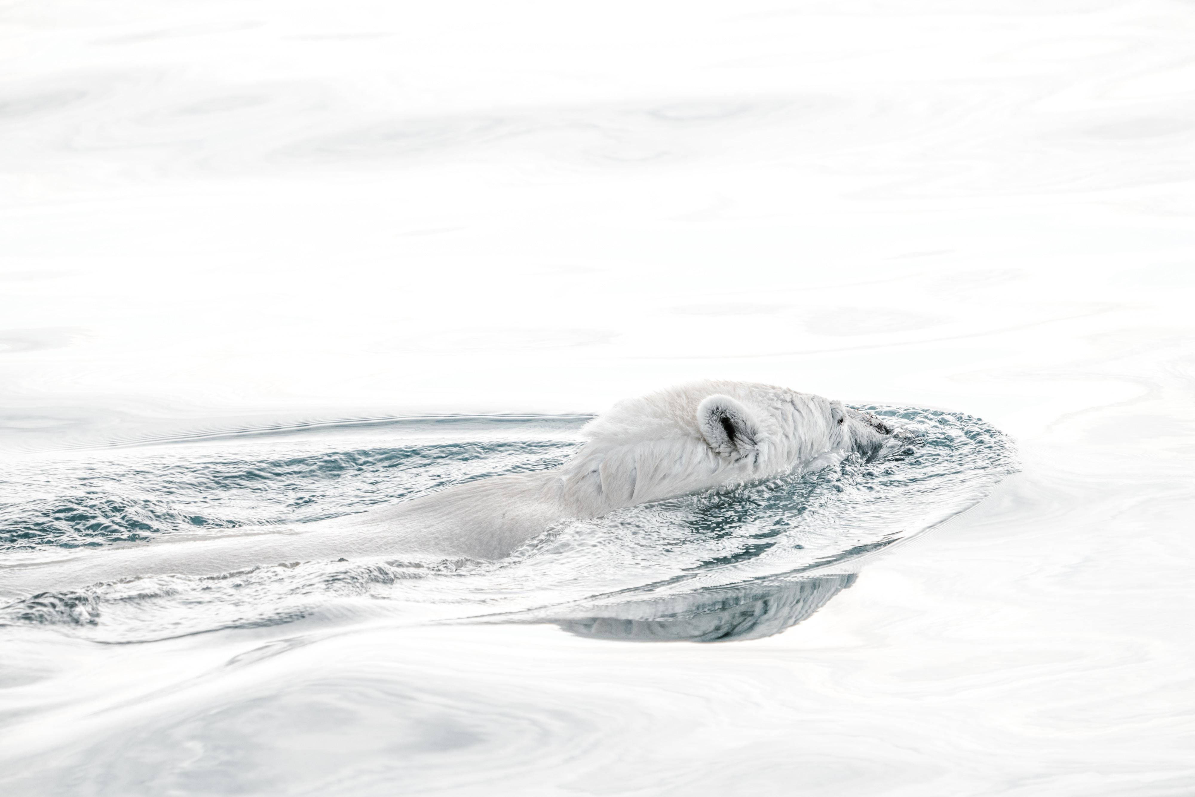 bear in body of water
