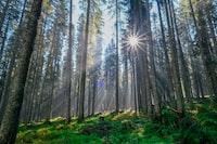 forest under sunrise