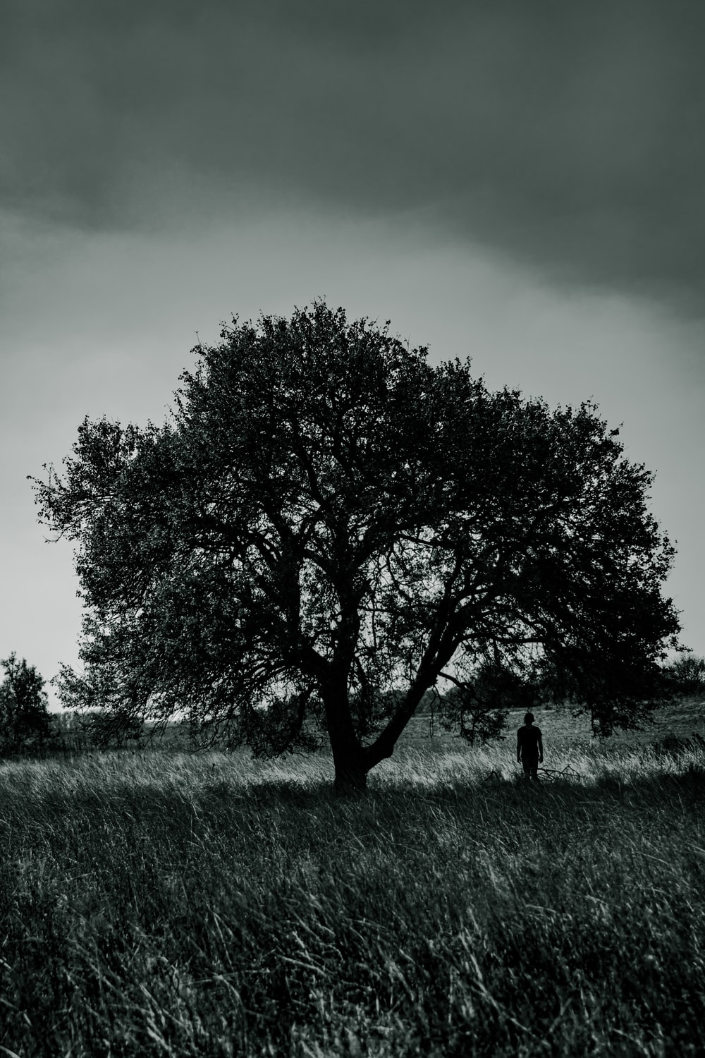 person standing under a tree
