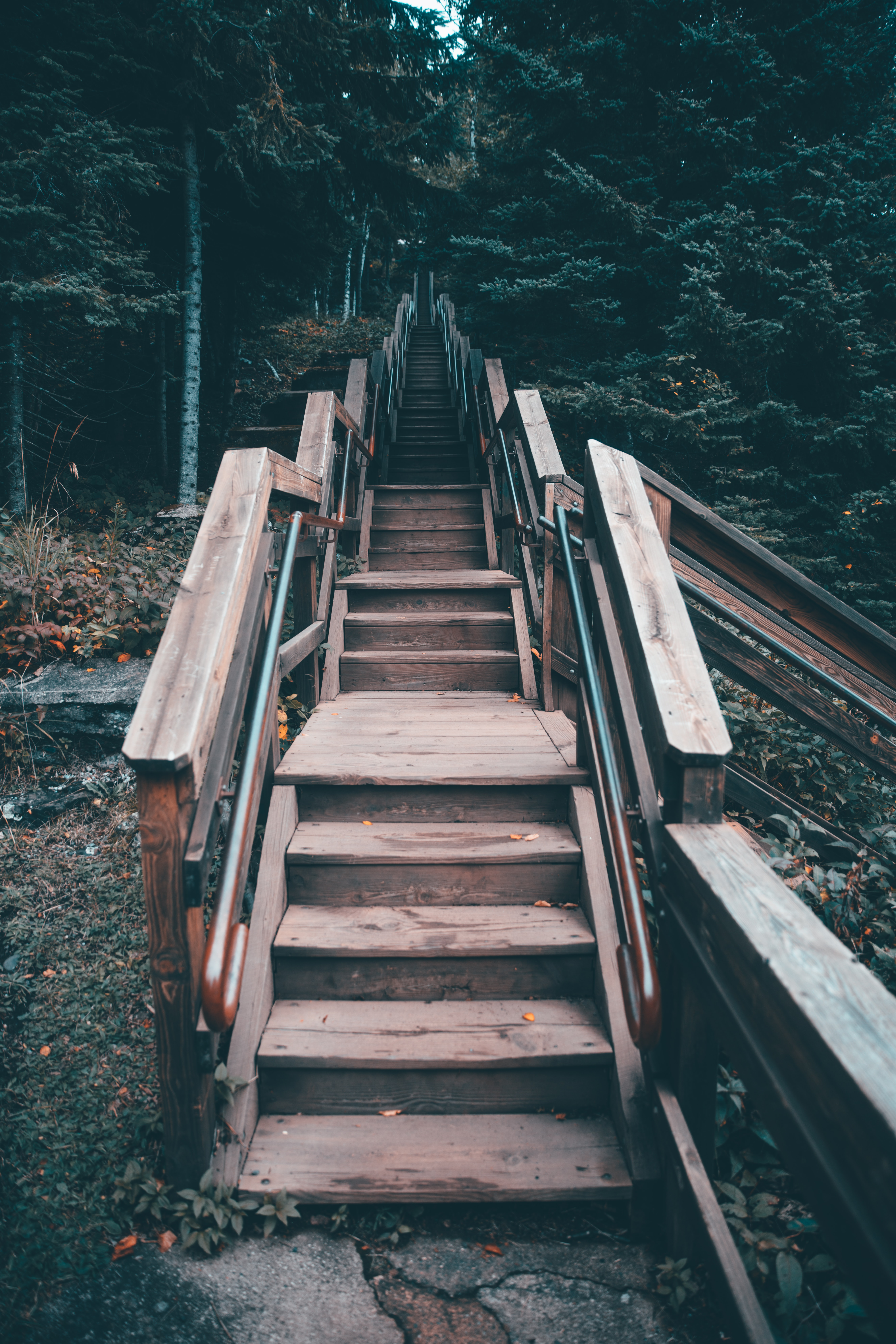 brown wooden stairs between green trees at daytime