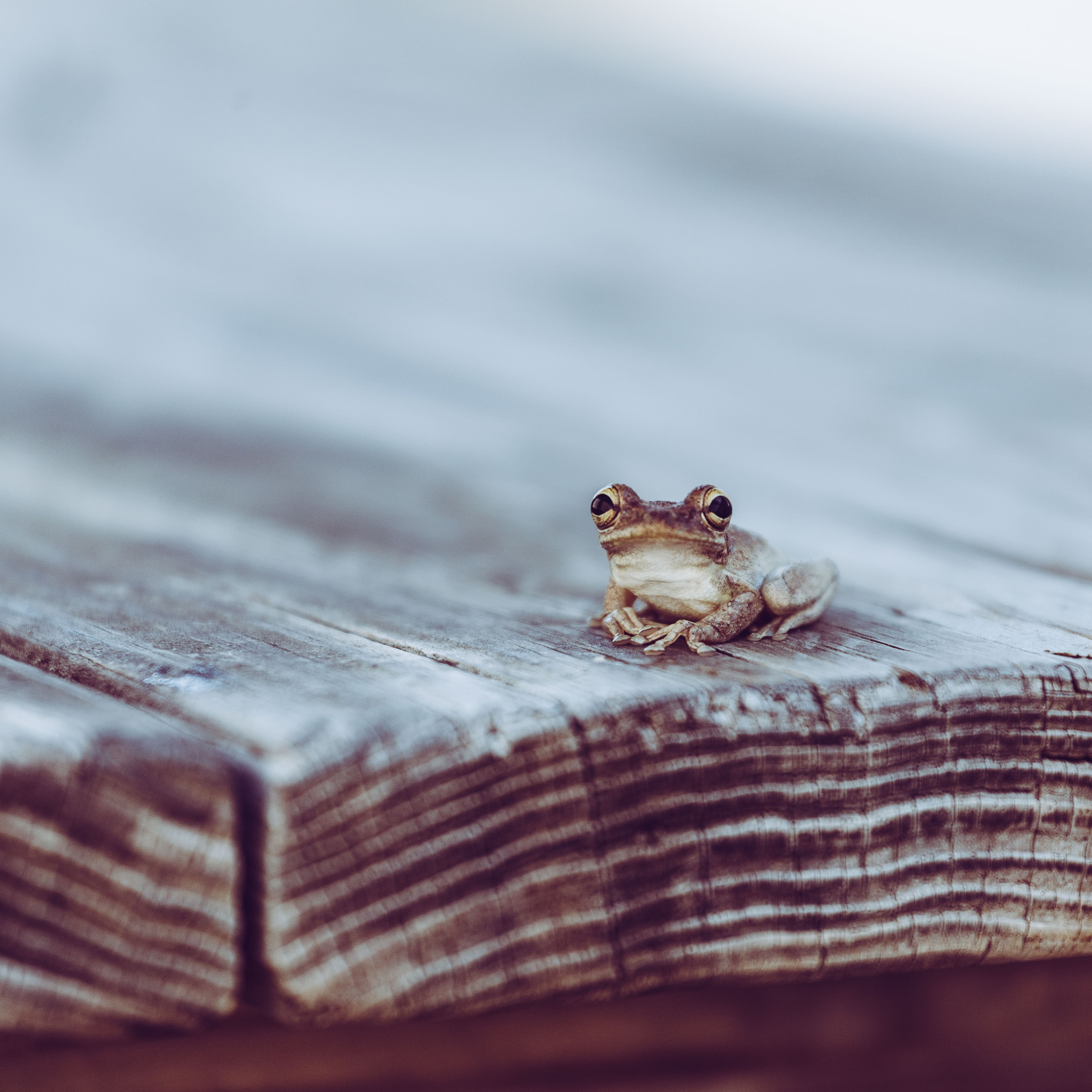 small black frog on wooden surface