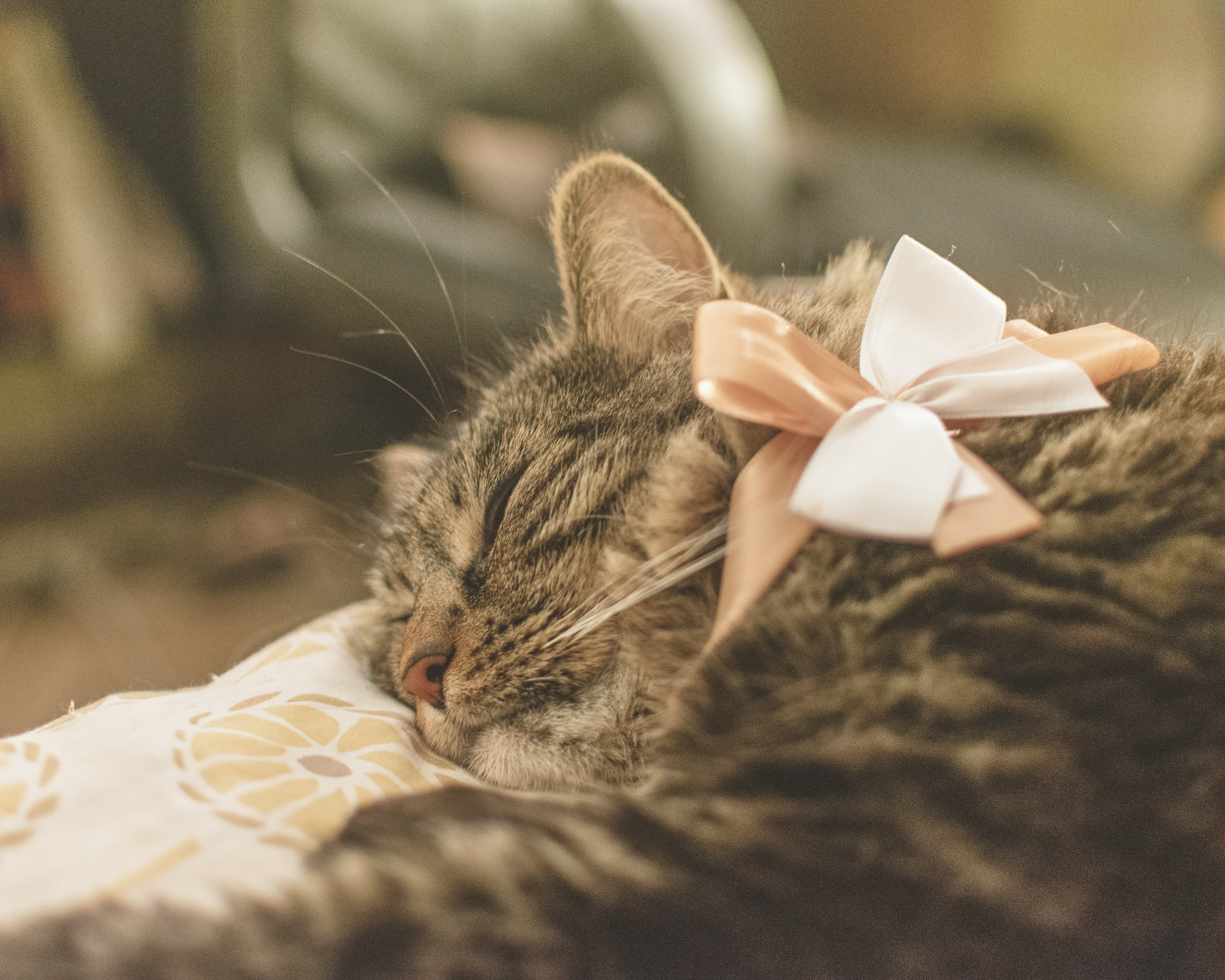 sleeping brown tabby cat