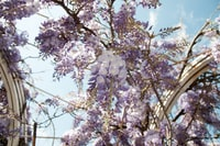 purple and white flower tree under cloudy blue sky