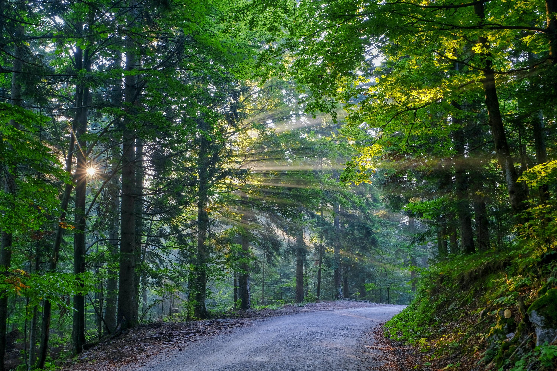 asphalt road between forest trees
