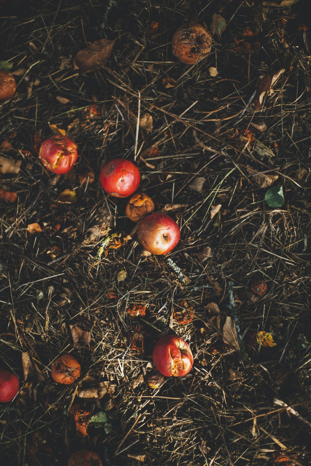 kerson fruit on grass