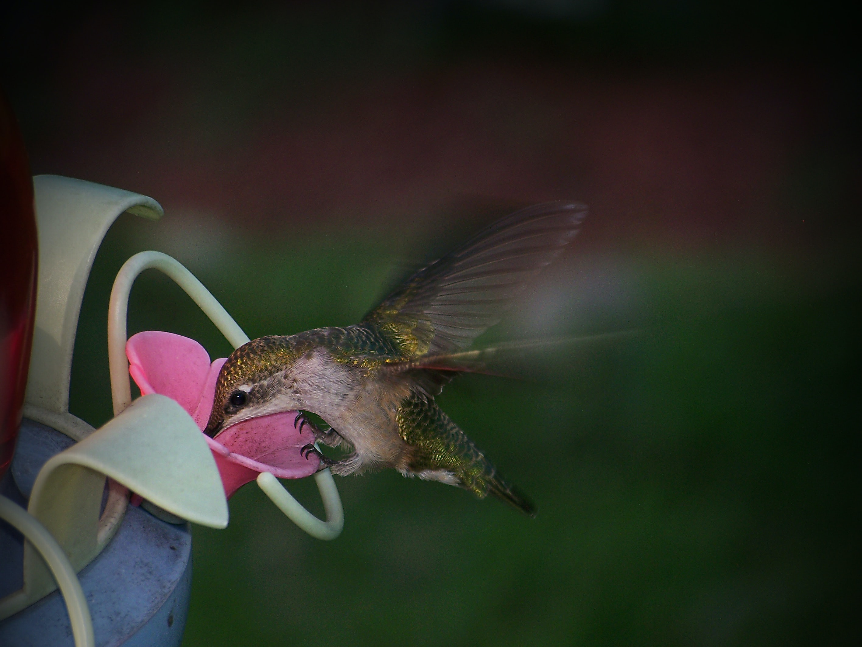 brown bird on pink petaled flower container