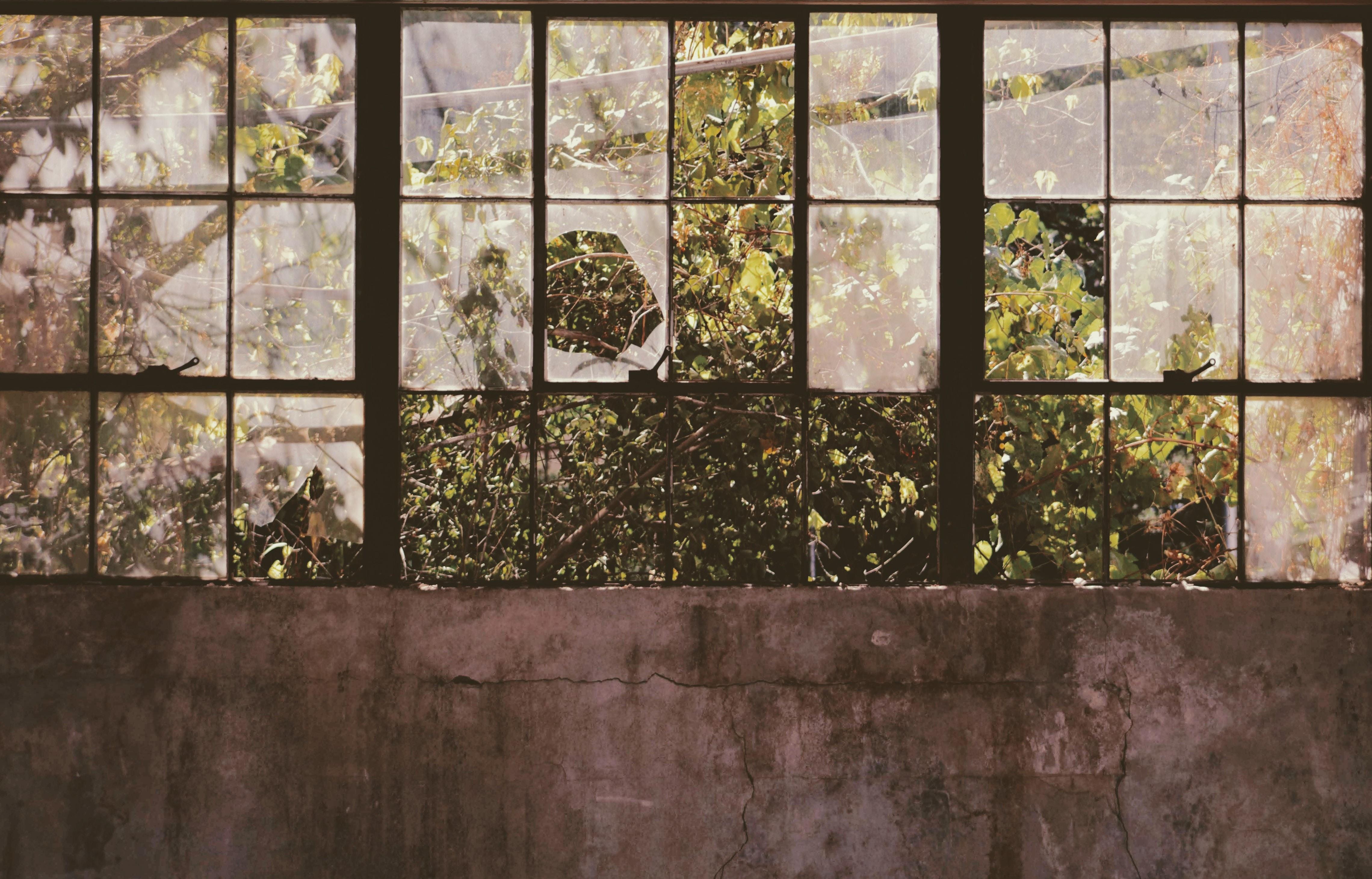 open window near tree