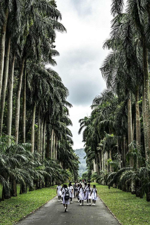 photo girls wearing school uniforms walking on pathway between trees