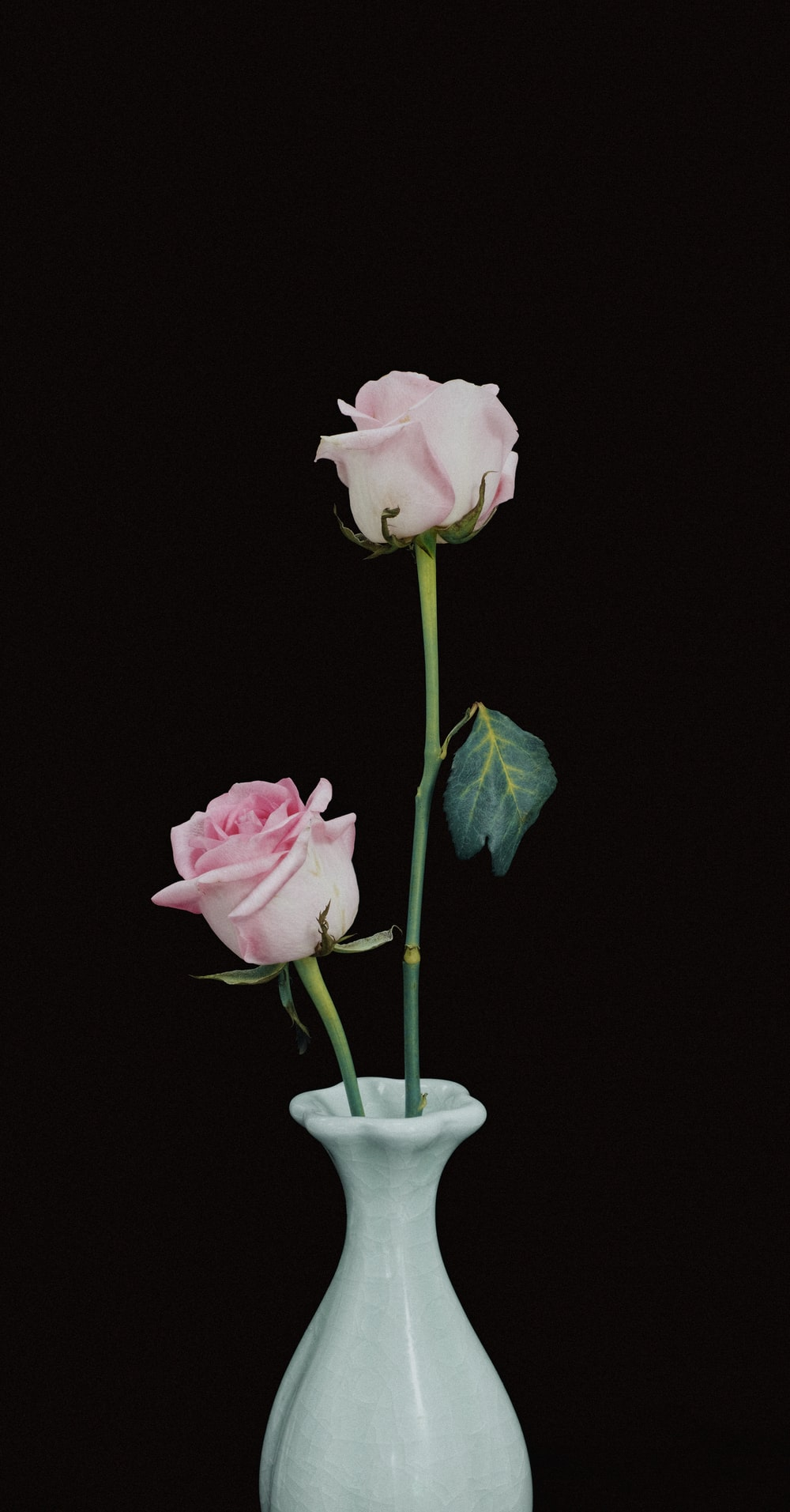 two pink rose flowers in vase