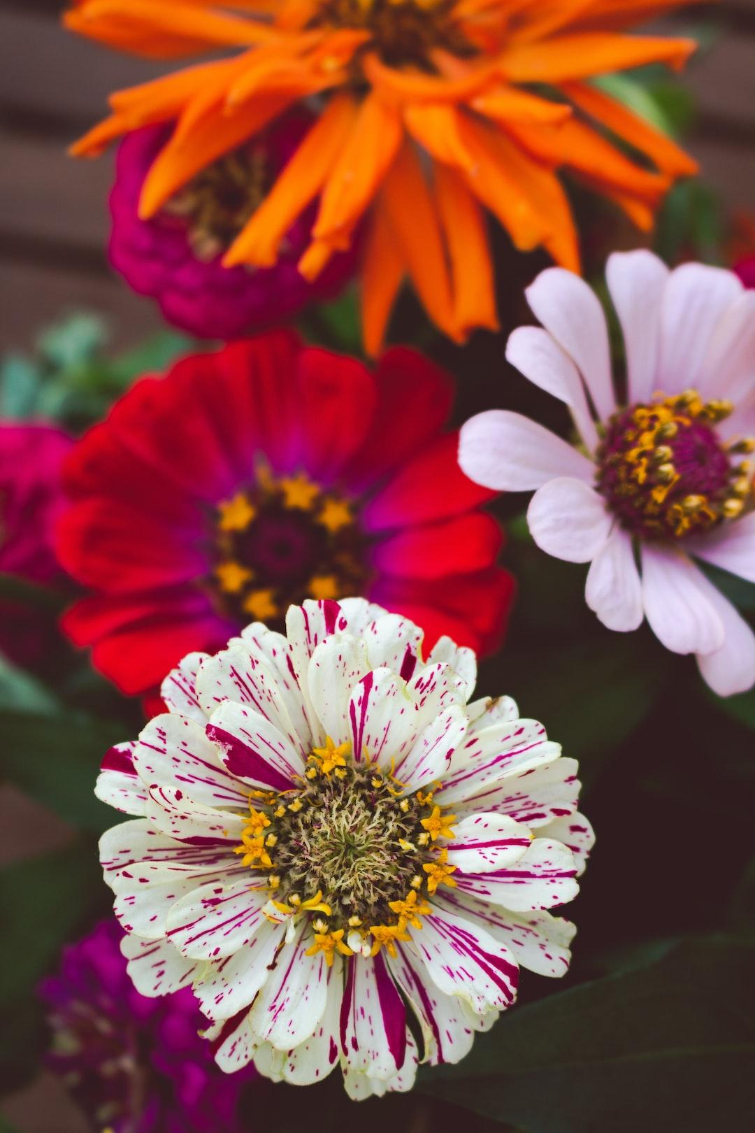 4784. Virágok