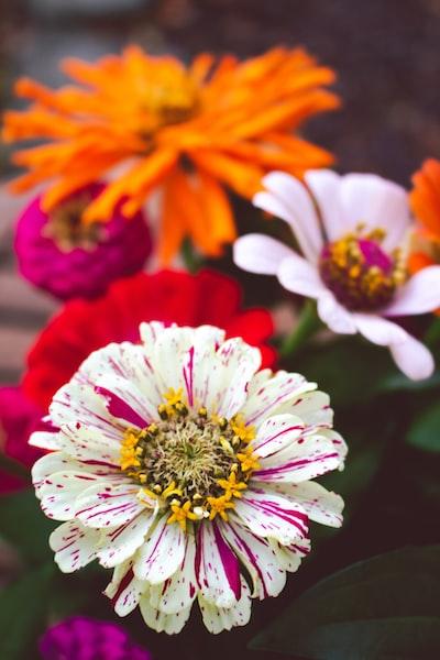 3936. Virágok