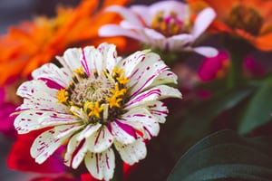 3958. Virágok