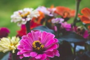 4787. Virágok
