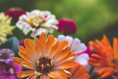 4798. Virágok