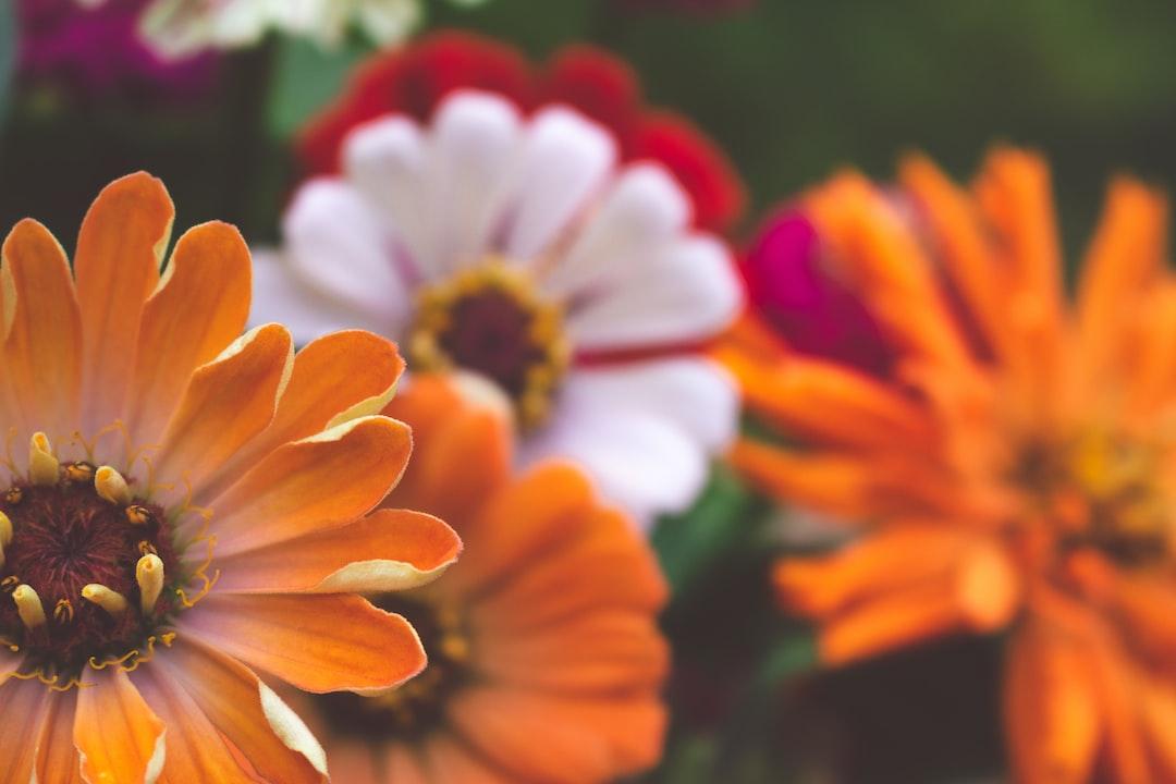 3933. Virágok