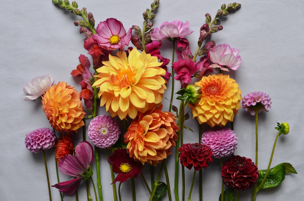 multicolored cluster petaled flowers on white wall