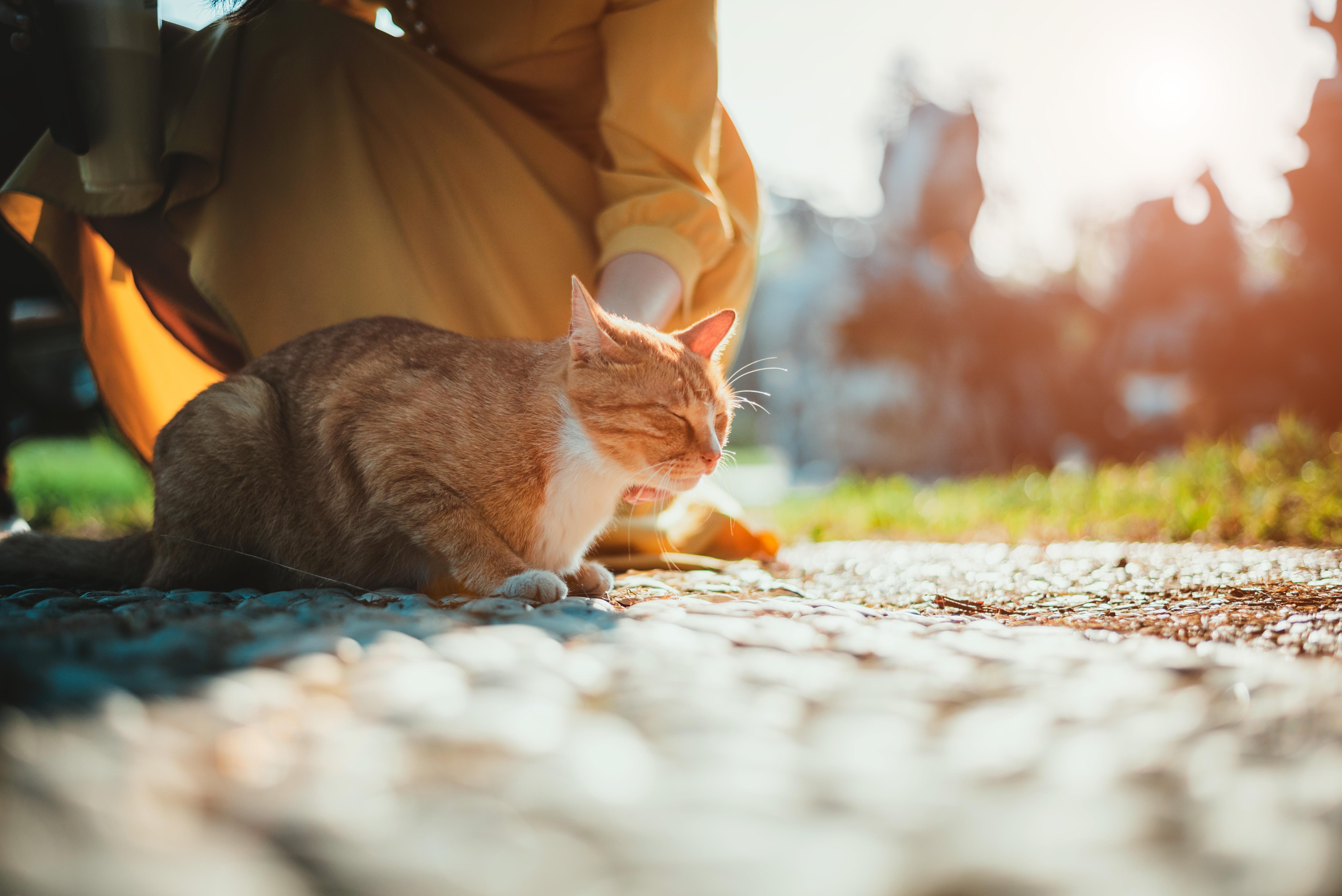 girl sitting near cat