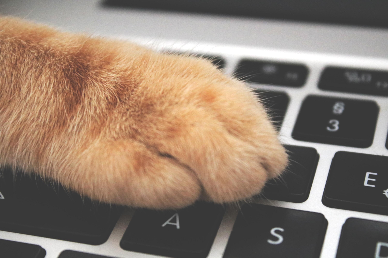 cat holding laptop computer keyboard