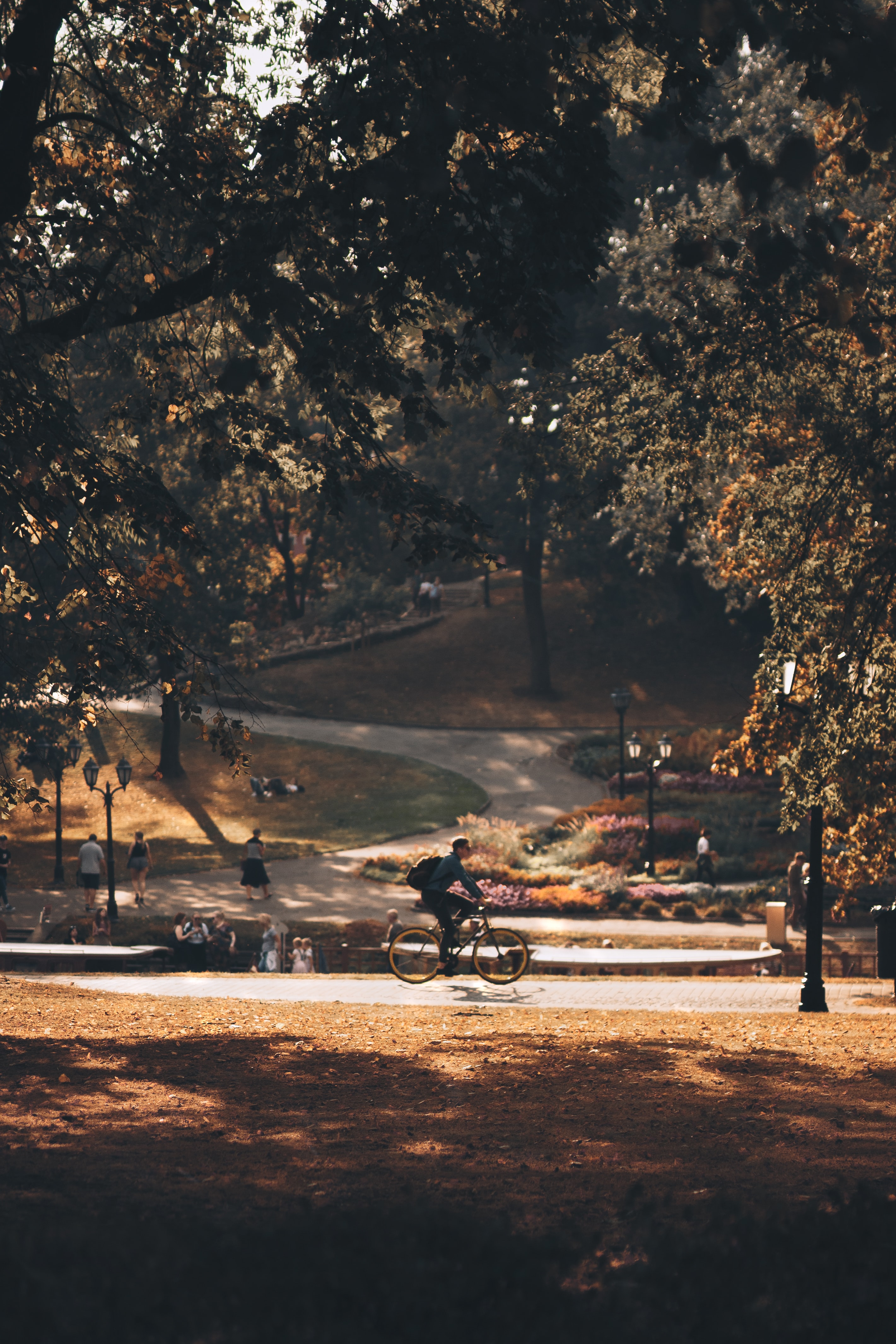 person riding bicycle on park