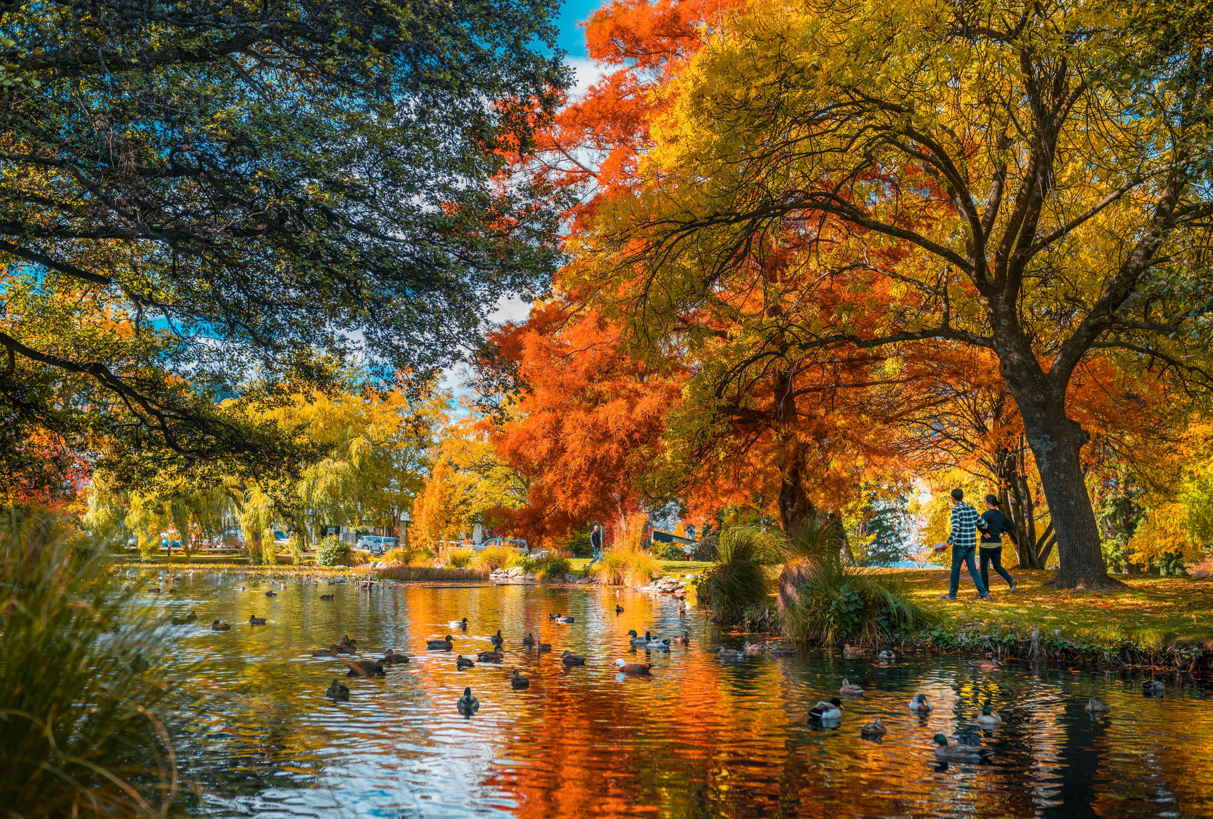 orange leaf trees beside river