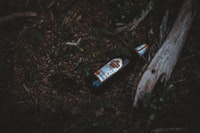 Beer bottle on the forest floor