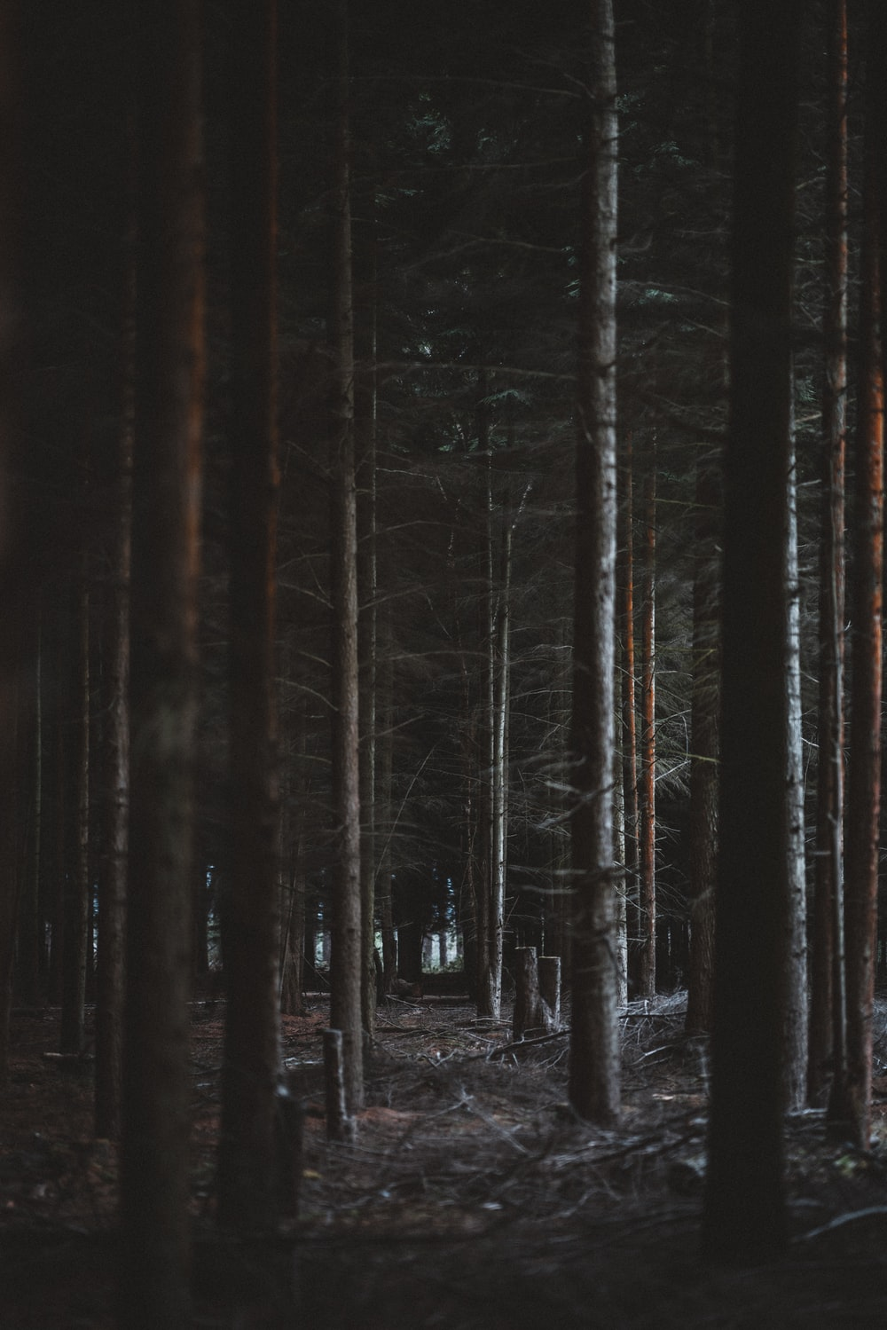 forest during nighttime