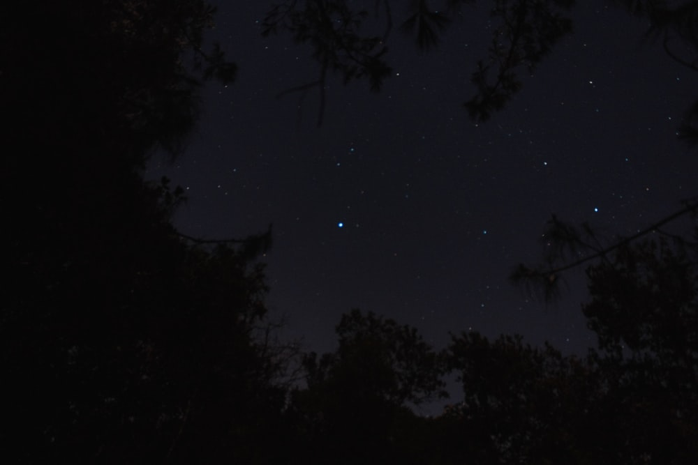 low angle photography of stars in sky