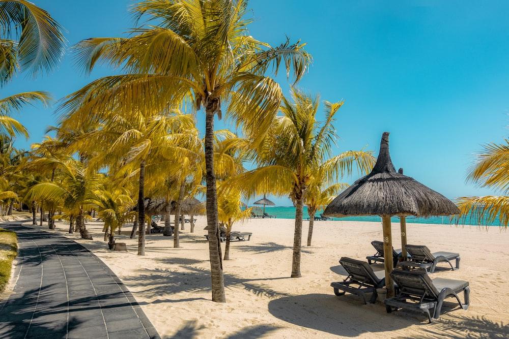 coconut tree near shoreline