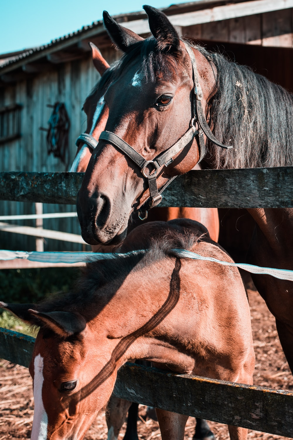 brown horses on farm during daytime
