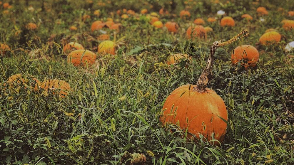 selective focus photo of pumpkins