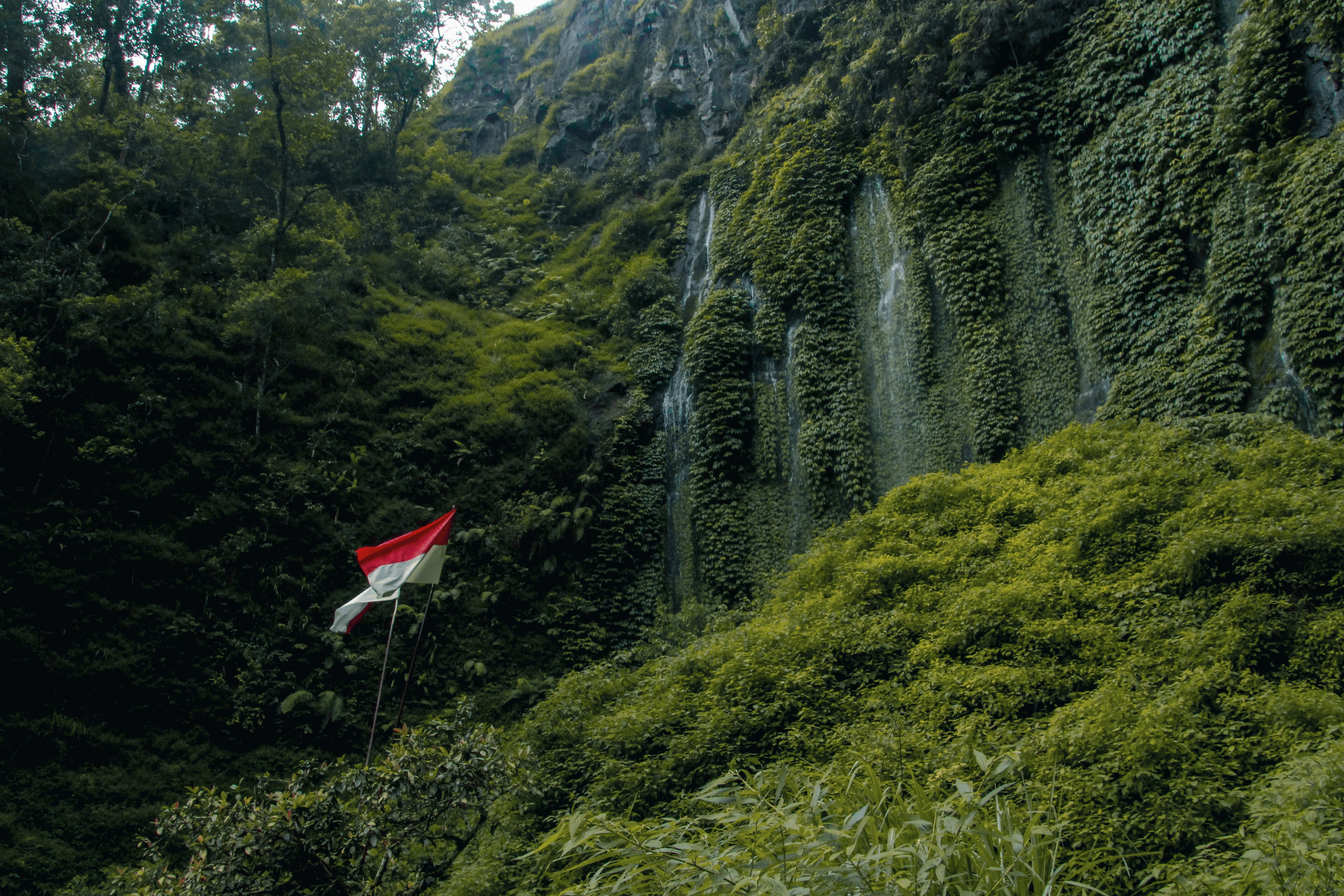 low-angle photography of red and white striped flag near green leaf trees