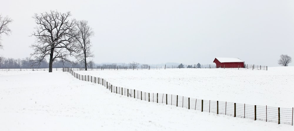 bare trees on snow field during daytime