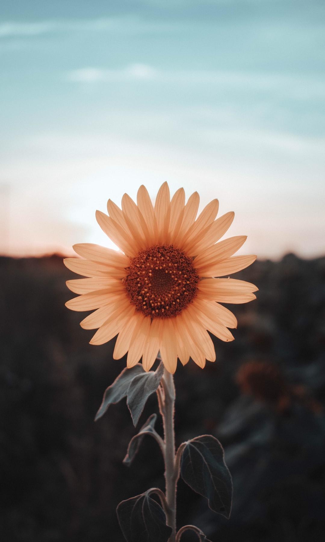 3989. Virágok