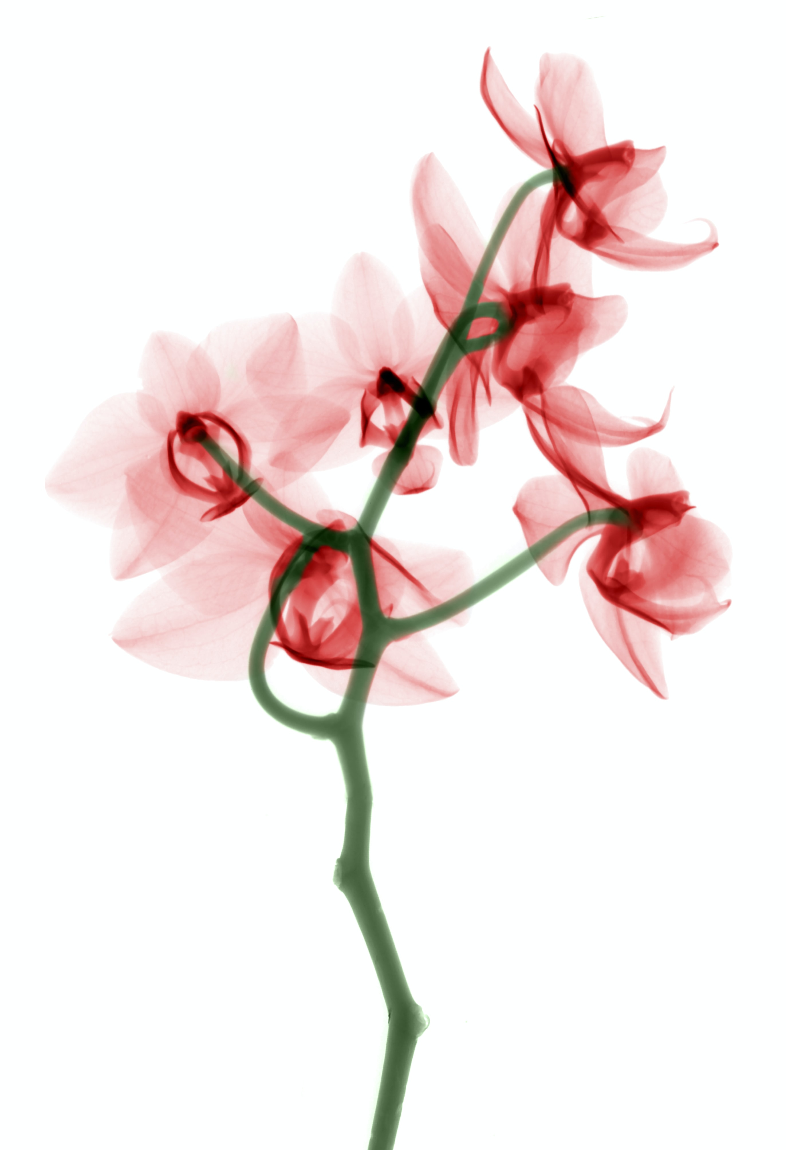 red petaled flower painting