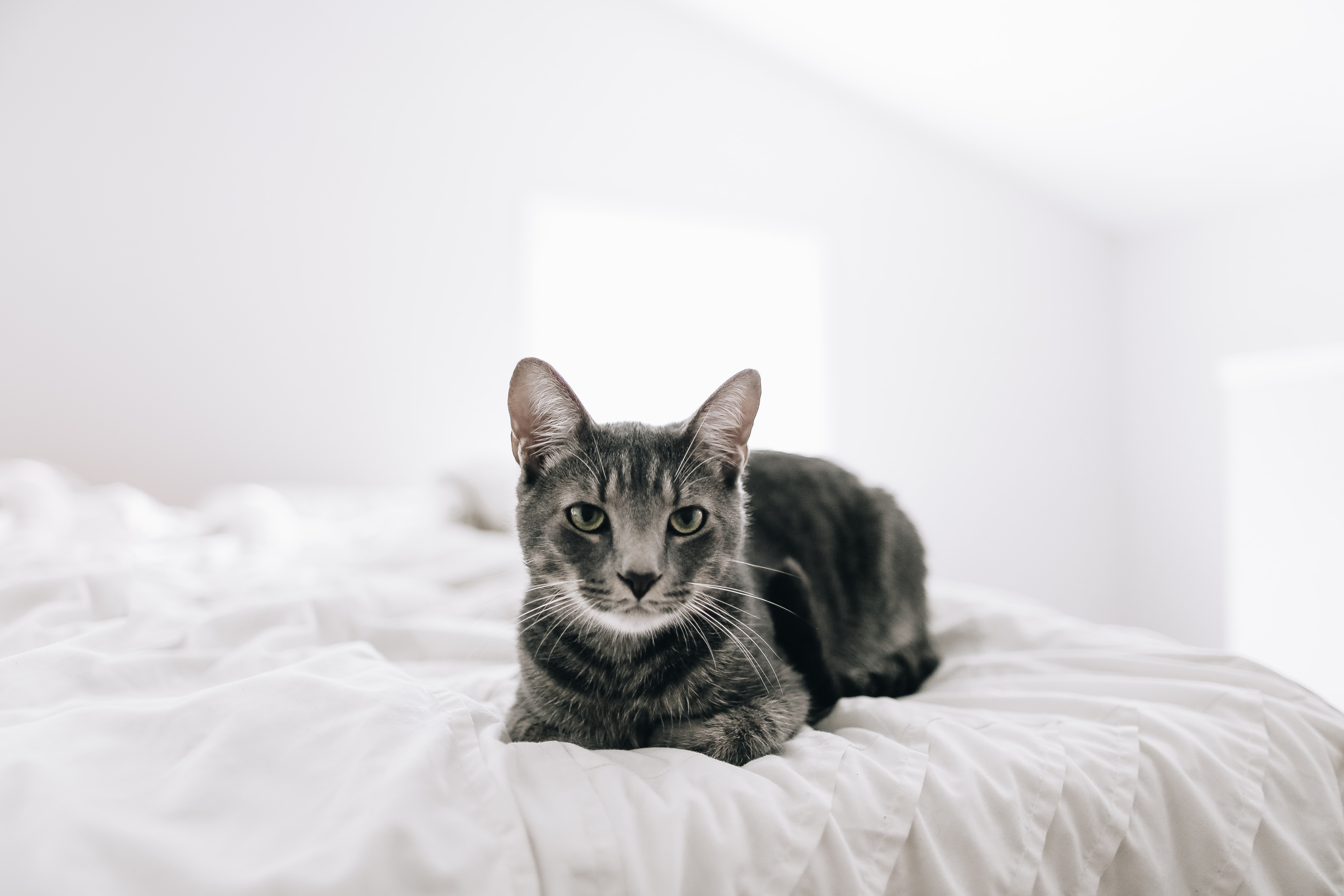 brown tabby cat on bed